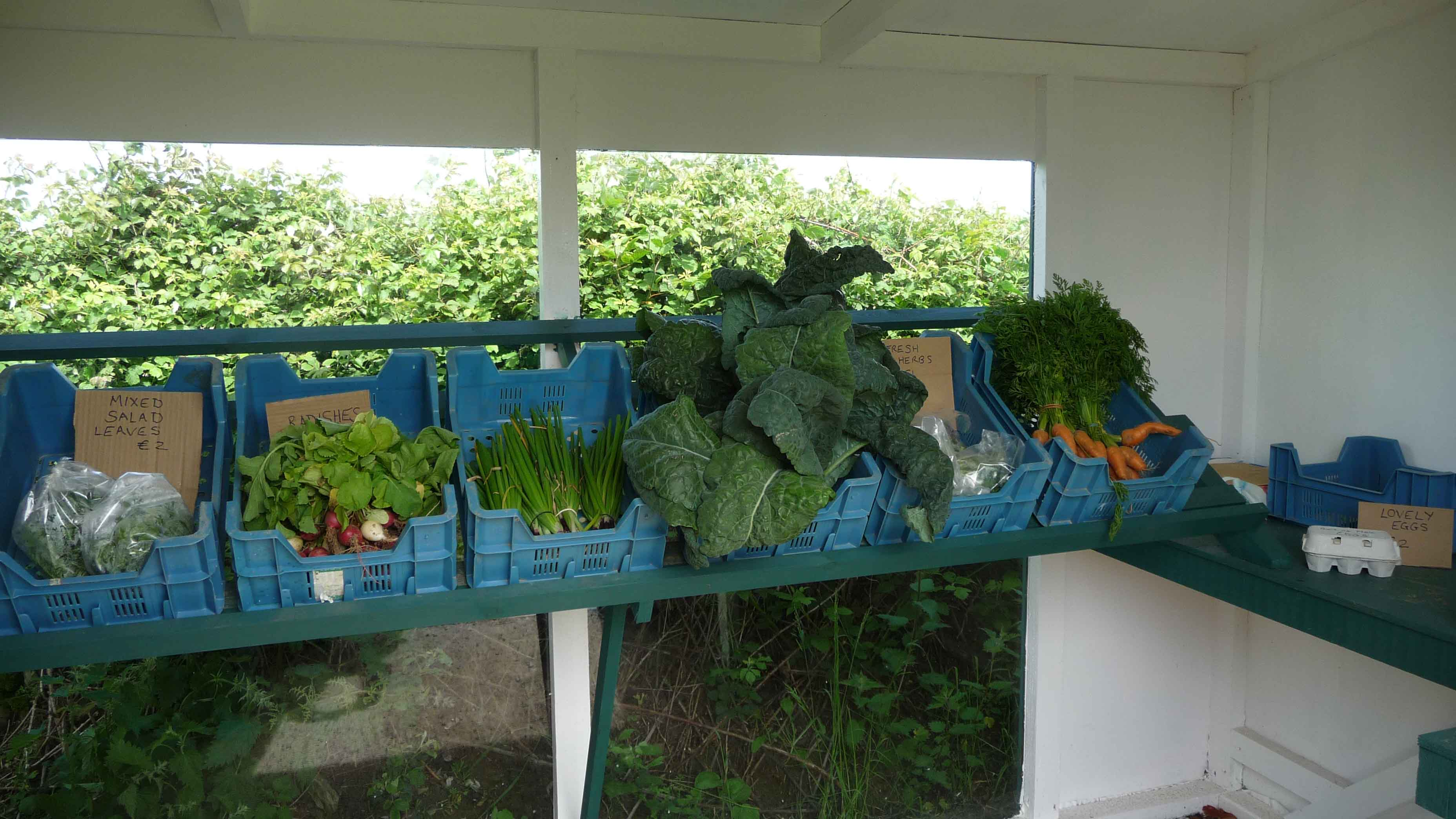 Vegetarian Guest Accommodation - Gort na Nain Farm, Kinsale, Cork